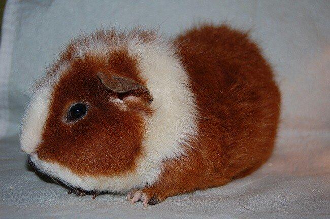 Вот так выглядит свинка: фото