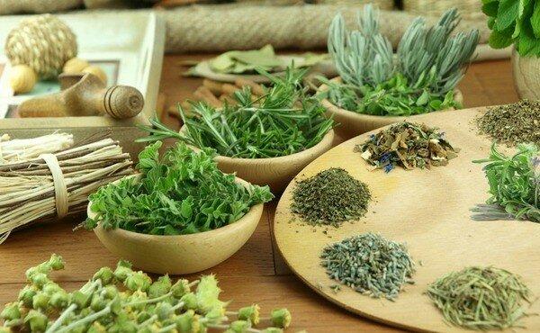 Разнообразные съедобные травы