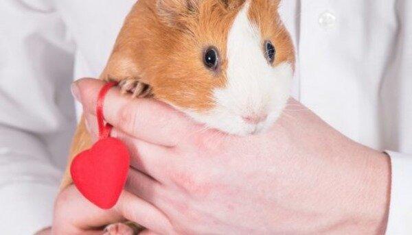 Содержание домашних животных — не только радость