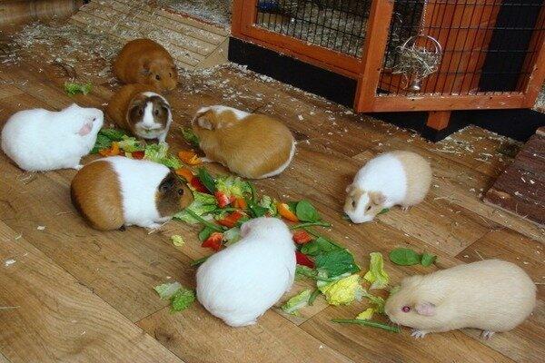 Кормление семейства грызунов