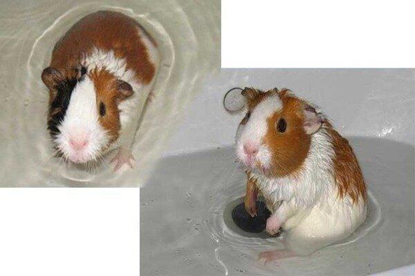 Правильное купание животного