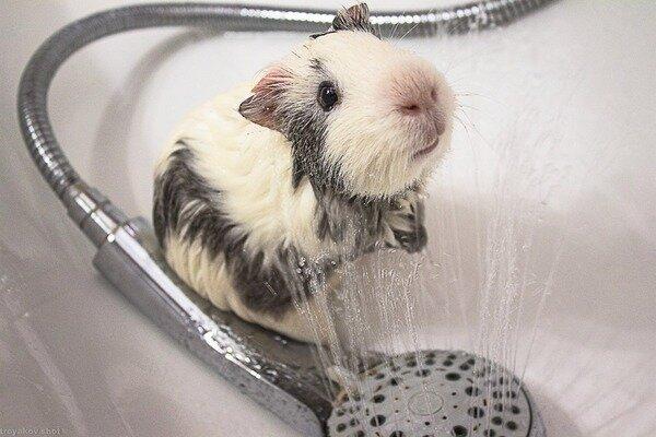 Как правильно купать животных